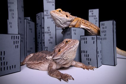 4 Ways Insurance Might Respond if Godzilla Attacks