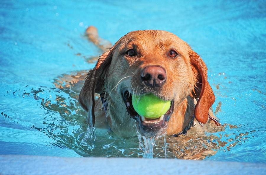 bigstock-a-cute-dog-swimming-in-a-publi-185189227
